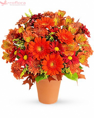 Buchet cu alstroemeria, gerbera si crizanteme