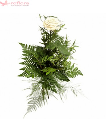 Trandafir alb cu verdeata