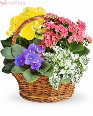 Cos cu flori multicolore