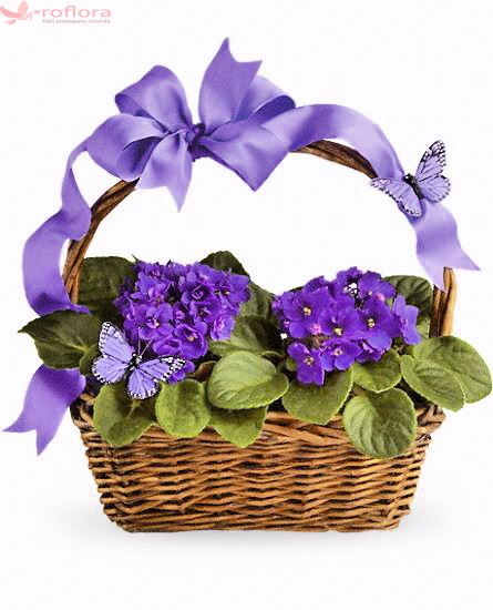 Cos cu violete africane