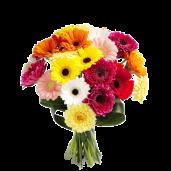 Colors of Joy –  Buchet din gerbera multicolora