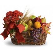 Summer - Cos gourmet cu fructe si planta