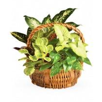 Green gift - Cos cu plante de verzi
