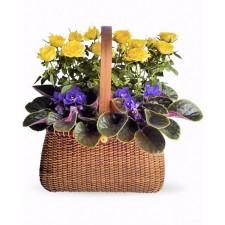 Blooming Garden - Cos cu minirosa si violeta africana