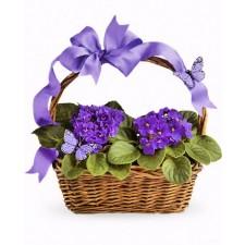 Butterfly & violet - Cos cu violete africane