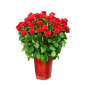 Devotion Deluxe - Buchet de trandafiri rosii