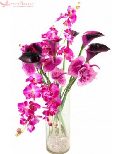 Orhidei si cale